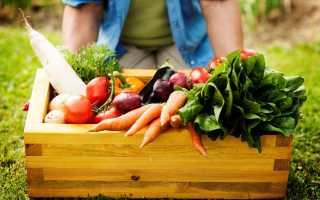 Температура хранения моркови: какие правила нужно соблюдать, чтобы сберечь овощ зимой, сорта, которые могут лучше для этого подходить