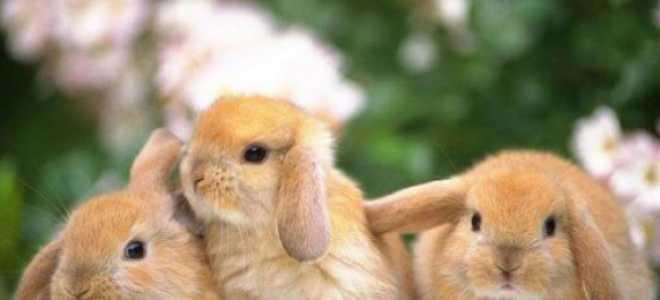 Кролик как назвать: имена для кролика – девочки, мальчика