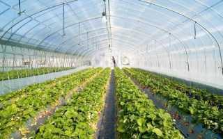 Обработка земли в теплице осенью – подготовка почвы к зиме, удобрения для теплицы
