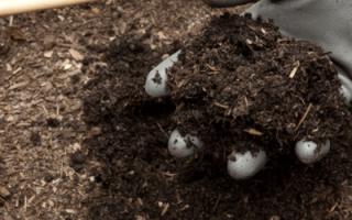 Как сделать компост на даче своими руками – подробная технология