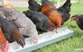 Минералы для кур: костная мука, ракушка, мел и гравий