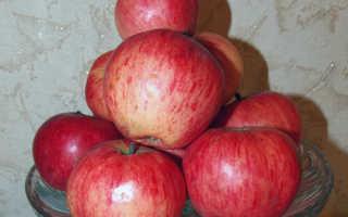 Яблоня Башкирский красавец: описание урожайного сорта