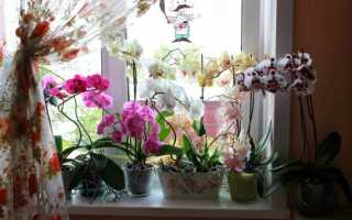 Как пересадить орхидею в другой горшок в домашних условиях и обеспечить уход, пошаговая инструкция, видео