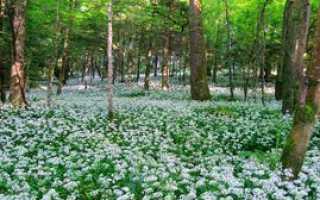 Лесные растения: какие цветы растут в лесу, список съедобных ягод, лесные растения в ландшафтном дизайне