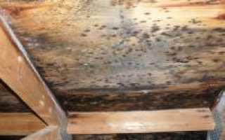 Грибок в бане: как избавиться, как убрать плесень с дерева, чем вывести и уничтожить на вагонке