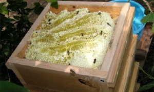 Изготовление японских ульев: особенности, детальные чертежи и видео