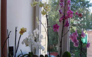 Как правильно ухаживать за орхидеей в домашних условиях, проблемы с орхидеей что и почему?