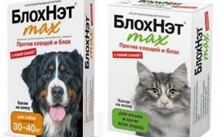 Блохнэт: отзывы о применении каплей и спрея для кошек и собак