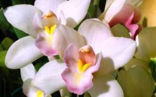 Аллергия на орхидею: симптомы и может ли она быть