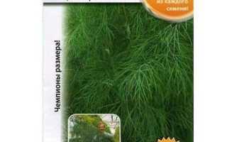 Укроп: выращивание на подоконнике из семян, как сажать, сколько растёт