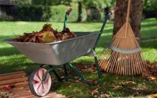 Особенности подготовки сада к зиме с сентября по ноябрь: уход за деревьями и кустарниками