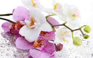 Букеты Орхидеи картинки (125 фото) скачать обои