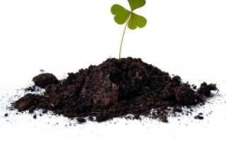 Как улучшить плодородие почвы на участке