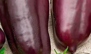 сорт перца клякса: фото, описание и характеристика сорта, отзывы тех, кто сажал