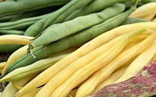 Как выращивать фасоль: подготовка почвы, посадка семян и правильный уход для большого урожая