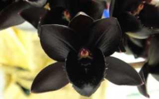 Самые красивые орхидеи: обзор редких сортов и видов