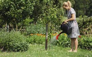 Правила выращивания дерева черешни