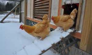Как утеплить курятник на зиму своими руками