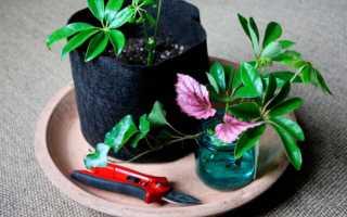 Размножение комнатных растений в домашних условиях различными способами