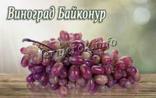 Виноград Байконур: описание сорта, фото, отзывы
