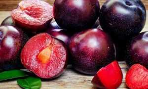 Шарафуга: описание и особенности выращивания гибрида сливы, персика и абрикоса