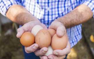 Как определить пол цыпленка: петух или курица и можно ли различить по яйцу