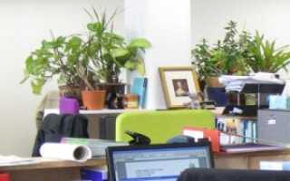 Неприхотливые цветы для офиса: фото и название