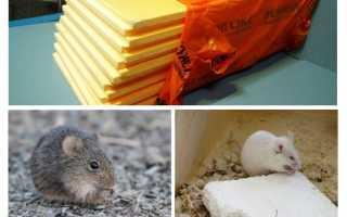 Едят ли мыши пеноплекс – способы защиты материала, фото и отзывы