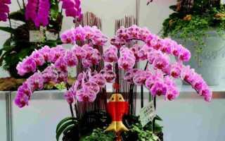 34 вида комнатных орхидей: названия, разновидности, описание