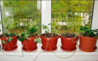 Какие растения можно выращивать на гидропонике