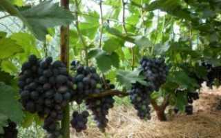 Мульчирование винограда соломой и другими материалами, виды и свойства мульчи