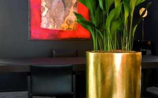Аспидистра уход в домашних условиях Размножение и пересадка Фото цветения