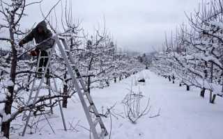 Обрезка деревьев зимой: техника и инструкция для садоводов