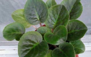 Болезни комнатных растений: виды и способы лечения домашних цветов, меры профилактики заболеваний