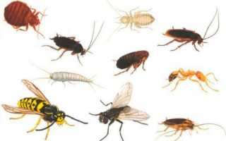 Домашние насекомые в квартире: виды, названия и характеристика паразитов