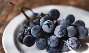 Виноград Русский Конкорд: селекция, описание, отзывы, посадка, уход, обрезка, отзывы