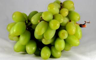 Виноград Тянь-Шань: описание сорта, особенности выращивания, болезни и вредители, фото