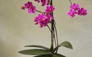 Грунт для орхидей фаленопсис: какой субстрат нужен, его состав и приготовление своими руками, оцениваем, что лучше