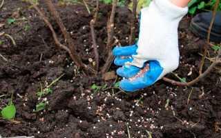 Подкормка кустарников весной – какие удобрения и когда вносить?