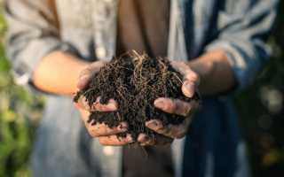 Как улучшить глинистую почву на участке – удобрения и подкормки