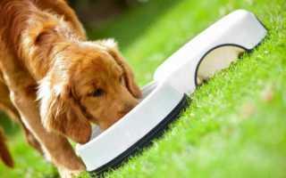 9 лучших кормов для собак