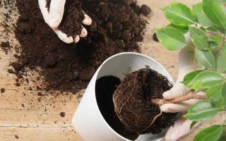 Земля для цветов и комнатных растений в домашних условиях