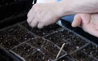 Лунный посевной календарь на февраль 2020 года для садоводов, огородников, цветоводов