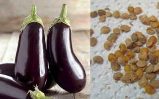 Как вырастить баклажаны, практические рекомендации, видео