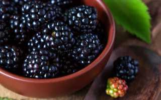 Черная малина: сорта, фото, посадка и уход