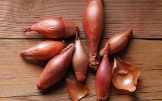 Агротехника выращивания лука-шалота: правильная посадка и уход