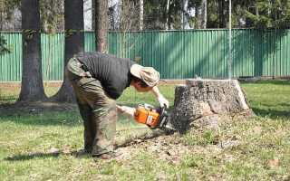 Как избавиться от пня спиленного дерева: без корчевания, быстро