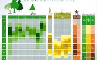Календарь цветения для аллергиков: особенности графика в Москве