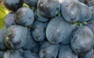 Виноград Руслан: описание сорта, история селекции, характеристики, болезни и вредители, фото