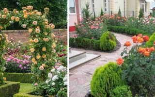 Розы в ландшафтном дизайне сада: фото, видео оформления дачного участка розами и другими растениями